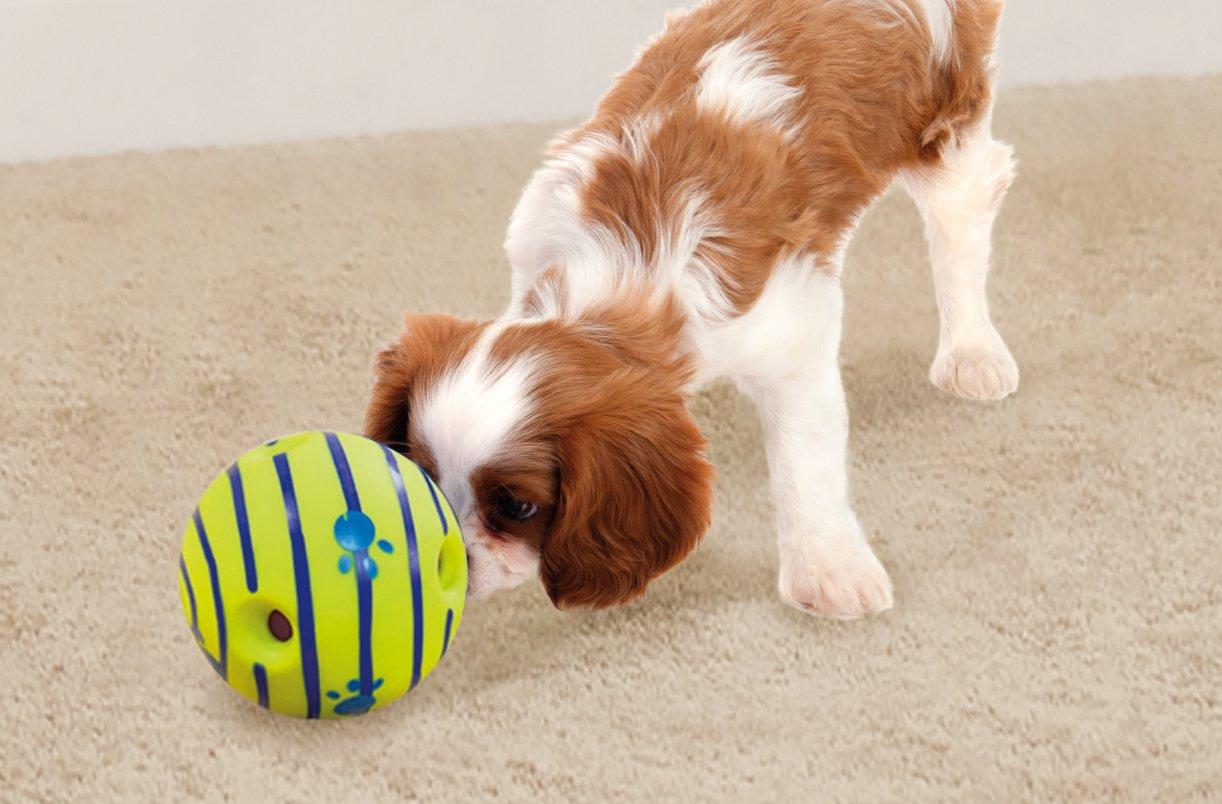 Balle interactive pour chien