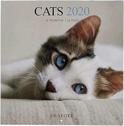 Draeger - Calendario de Pared Grande Cats 2020 - Calendario de Gatos - Parrilla Mensual - 7 Idiomas - Certificado FSC Mixta - Tinta Vegetal - Calendario de Pared 2020 Formato Grande 29x29cm: Amazon.es: Oficina y papelería