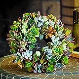 """Shop Succulents Living Succulent Plant Wreath 8"""""""