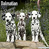 Dalmatian Puppies Calendar 2017 - Dog Breed Calendars - 2016 - 2017 wall calendars - 16 Month by Avonside