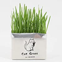 AKDSteel Pet Cat Grass Soilless Hydroponic Seed Growing for Oral Cavity Cleaning Barley flavor[Pet Supplies]