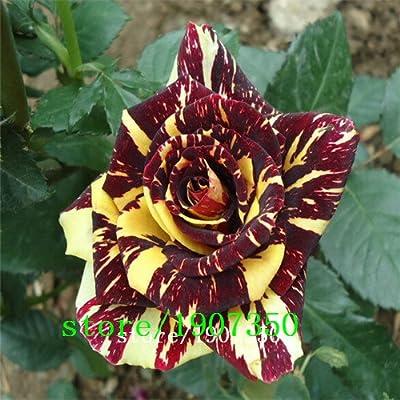 Adenium desert rose seeds 100pcs Rare beautifu rose plant fresh flower seeds True Seeds Light Fragrant Plant