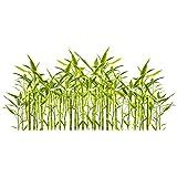 Riesenbambus (Moso Bambus) / 50 Samen/wächst in Rekordgeschwindigkeit/Ideal als schnell wachsender Sichtschutz & Windschutz/Sturmschutz