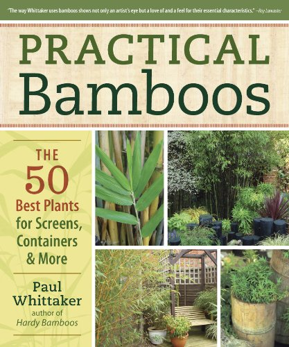 Cheap  Practical Bamboos: The 50 Best Plants for Screens, Containers and More