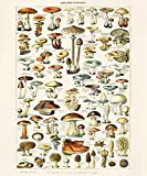 "16"" x 20"" Vintage French Botanical Mushrooms Diagram Chart by Adolphe Millot Poster Reproduction Print Champignons"