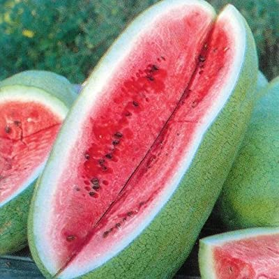 "(FW)~""CHARLESTON GREY"" WATERMELON~Seeds!!!!~~~~~~Big Boys! : Watermelon Plants : Garden & Outdoor"