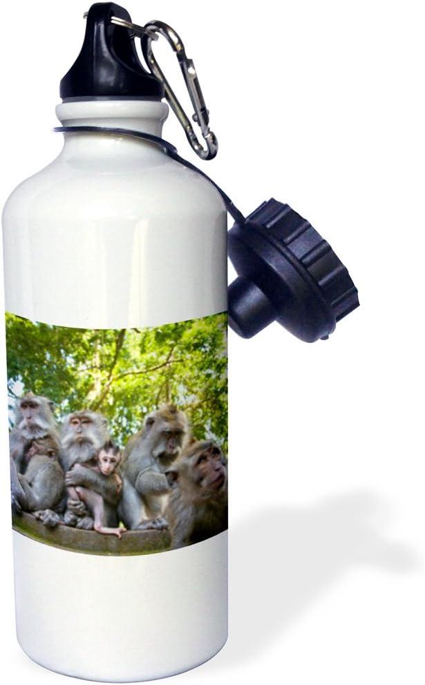 White 3dRose wb/_73548/_1 Bali 21 oz Sacred Ubud Monkey Forest Longtail Macaque-AS11 SWS0131-Stuart Westmorland Sports Water Bottle