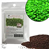 Luffy Aquarium Grass Seeds (Glossostigma Elatinoides) - 2oz Pack - Aquarium Carpet Plant