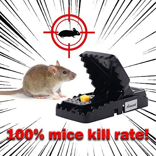 Buy mouse traps best