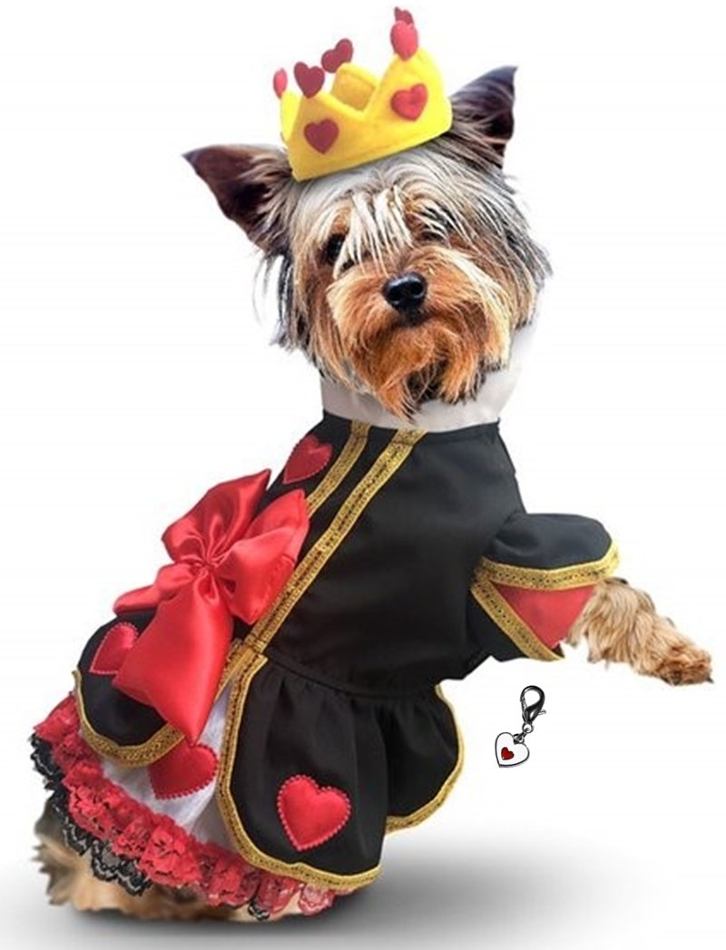"""Puppe Love Queen of Hearts Costume Dress with Charm and Heart Crown Headpiece – for Dogs – Sizes XS Thru L (S/M – Chest 14-16"""", Neck 9-10.5"""", Back 10.75'', Red/Black)"""