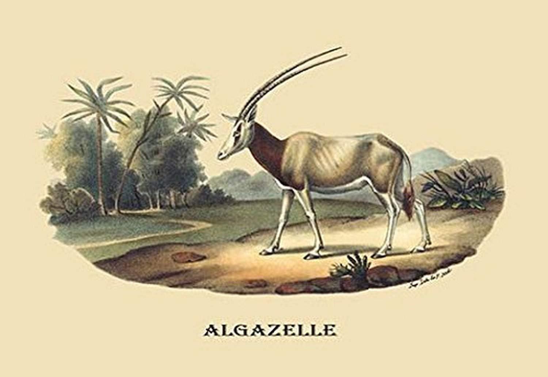 P1827 Algazelle (Gazelle) Paper Poster