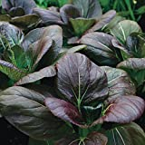 Bok Choy Purple 'Red Choi H' (Brassica Rapa Chinensis Group) Vegetable Plant, 1.5g Seeds