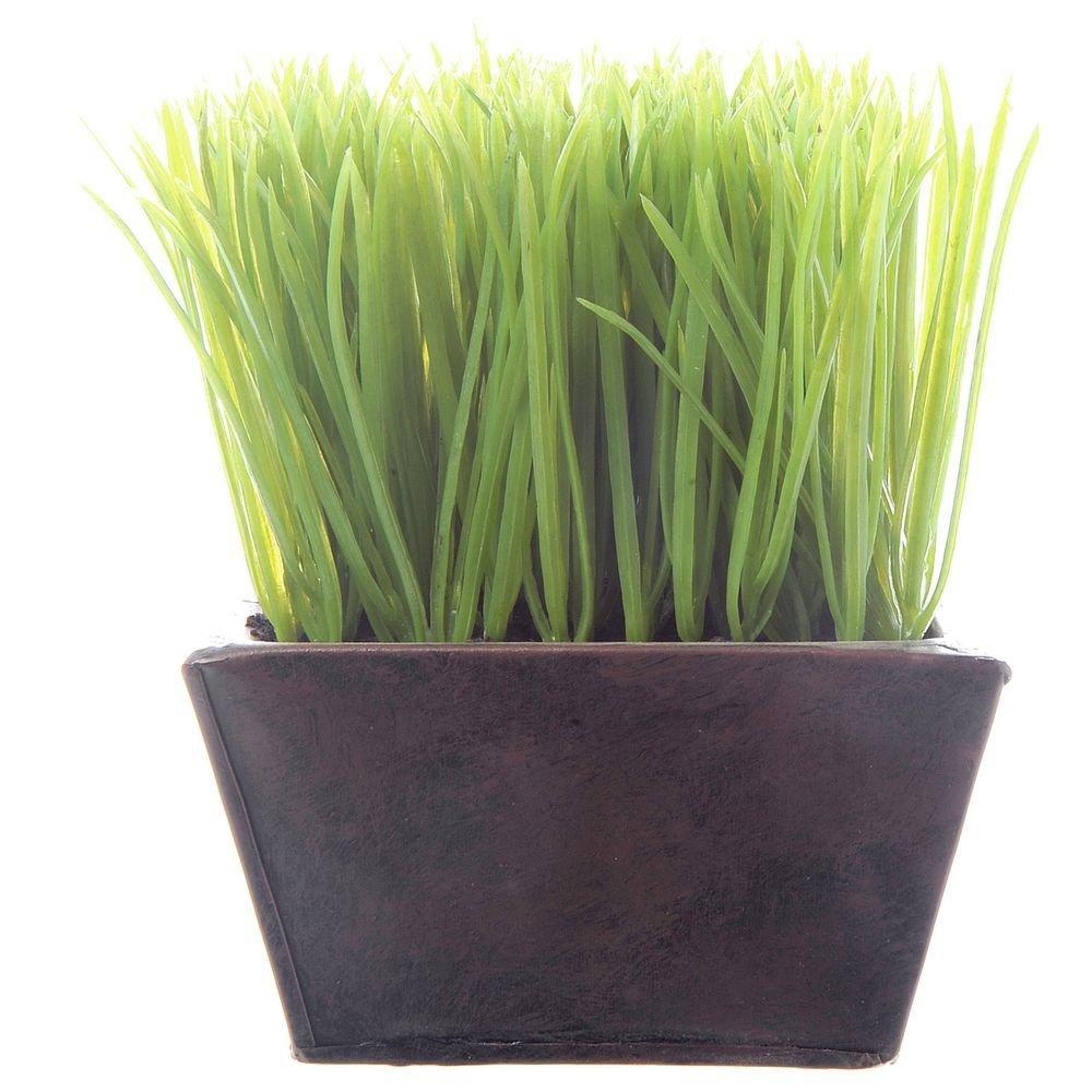 Wheat Grass Planter