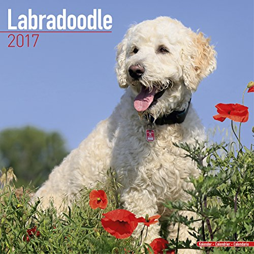 Labradoodle Calendar 2017 - Dog Breed Calendar - Wall Calendar 2016-2017