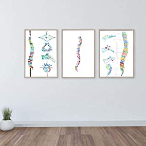 Spine Anatomy Artwork Poster Wall Art Canvas Poster Nordic Painting Wall Picture for Chiropractic Wall Art Office Decor/50x70cmx3piece-Frameless Canvas Wall Art