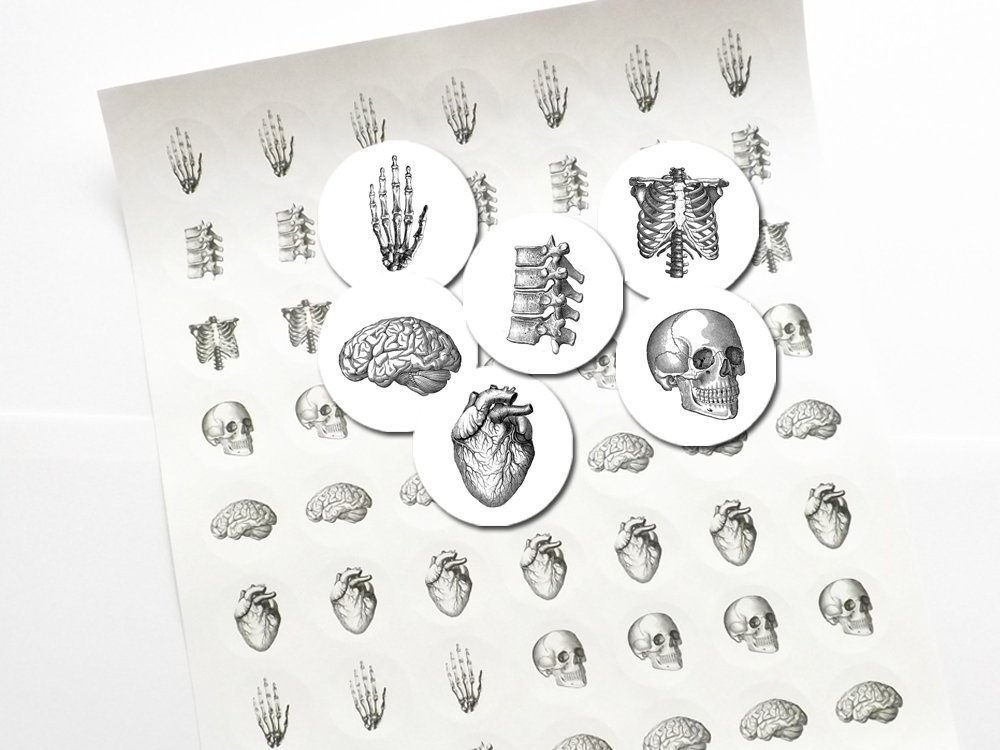Anatomy 1 inch Stickers skull brain hand anatomical heart labels envelope seals