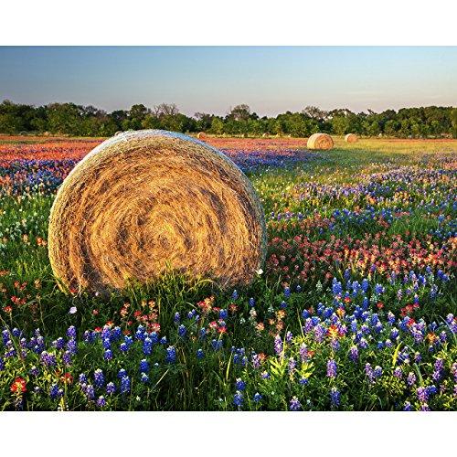 8x10 Texas Wildflower Photo,