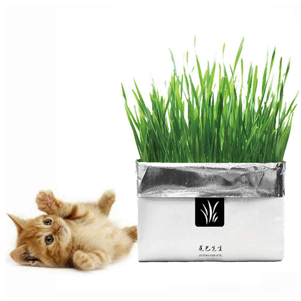 FOONEE Cat Grass Kit Cat Grass Seeds Organic Cat Wheat Grass Seeds Free Soil Need Watering Growth- Natural Hairball Control, Natural Digestive Did