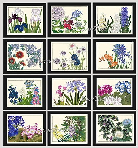 Blue Flower Art Print Set of 12 Antique Japanese Woodblock Beautiful Botanical Wildflowers