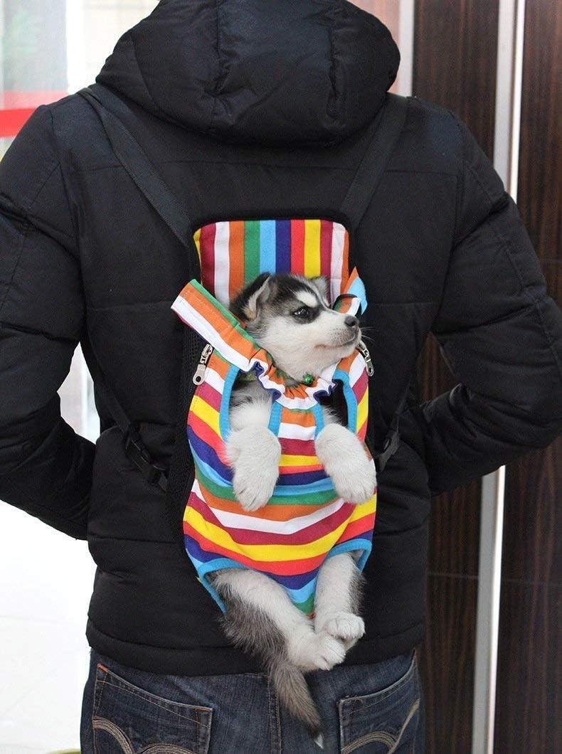 chats et chiots convient pour promenades et voyages sac banane souple et l/éger pour chiens Sac de transport ventral pour chien confortable pour les animaux domestiques Ducomi
