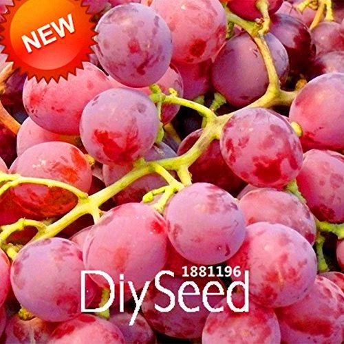 ! ¡Nueva llegada 100 PCS / Semillas Paquete rojo dulce de frutas de pepitas de uva avanzada Crecimiento natural de la uva deliciosa fruta jardinería plantas, # 66HFVK SVI