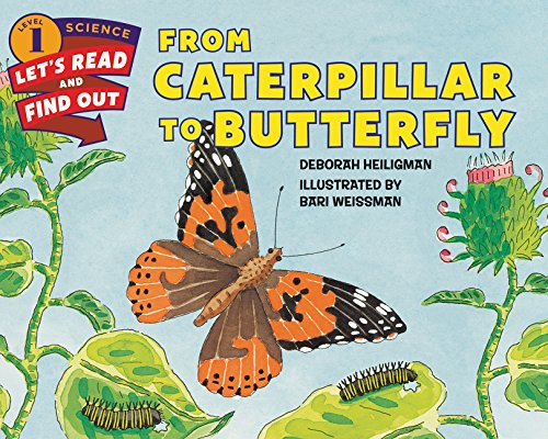 Caterpillar Butterfly Lets Read Find Out Science