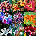 Elever 20Pcs Beautful Home Gardening Balcony Bonsai Mix Colors Rare Lily Flower Seed