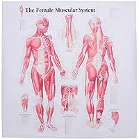 Hemobllo Home Laboratory Hospital Clinic Restaurant School muscular