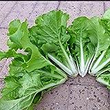 Bird Rape Seed Brassica Campestris Organic Vegetable ~1 Pack 200 Seeds~