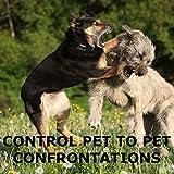 SAFETY-SPORT DOG HORN XL