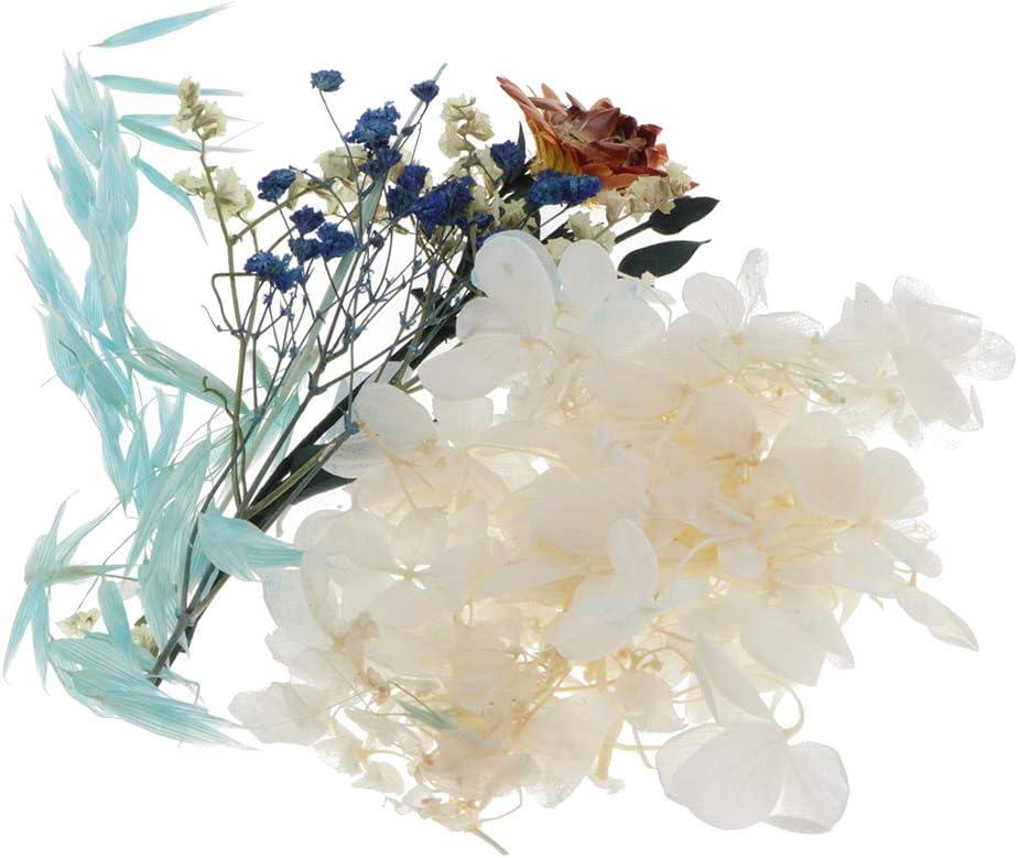 Gepresste Blume Trockenblumen Getrocknete Blumen Blüten für Diy