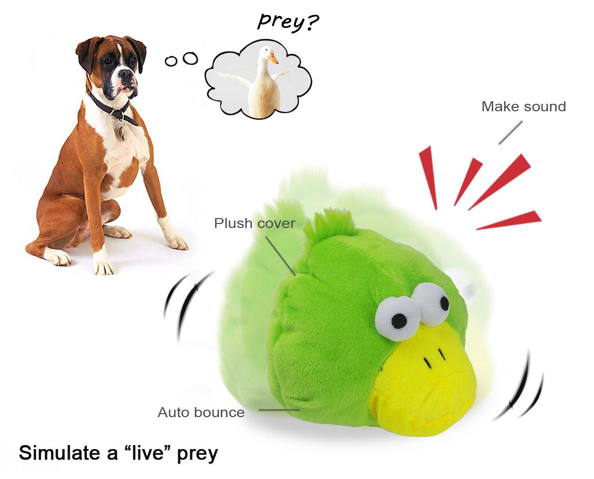 Pet Supplies : YOGADOG Interactive Plush Squeaky Dog Toys, Crazy ...