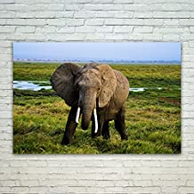 Westlake Art - Poster Print Wall Art - African Elephant - Modern Picture Photography Home Decor Office Birthday Gift - Unframed - 18x12in (xd9-61f-edb)