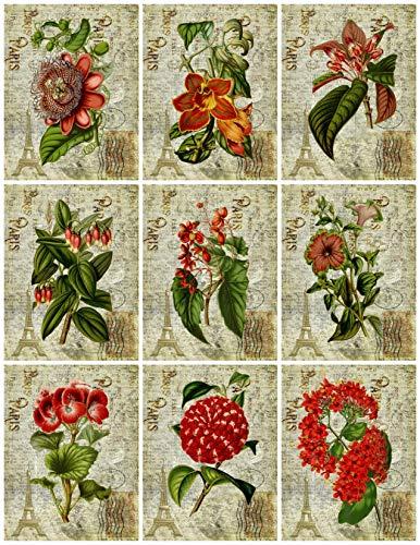 (Vintage Botanical Red Flowers on French Ephemera Collage Sheet Altered Art, Card Making, Gift Tags, Scrapbook 8.5 x 11
