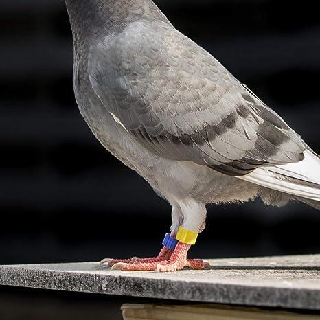 Colore Casuale nbvmngjhjlkjlUK 100 Pezzi piccioni Anelli 8 mm Anello di identificazione a baionetta Apertura Anello Piccione Colore Anello Piede Piede Piccione Forniture