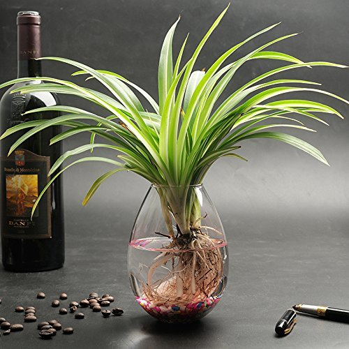 5 Packs Wall Hanging Planters Glass Plant Pots Water Plant Containers Glass Flower Pots Wall Hanging Glass Planters Plant Containers Hanging Planters Air Plant Terrariums Glass Terrarium