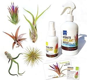 The Drunken Gnome Tillandsia Air Plant Variety Pack Plus 2oz Fertilizer Food and Water Spray Bottle Mister (5)