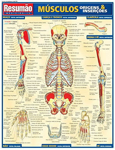 Músculos Origens e Inserções