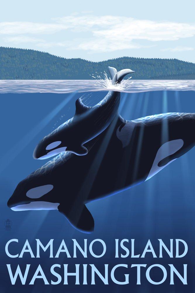 Camano島、ワシントン – Orca and Calf 36 x 54 Giclee Print LANT-48364-36x54 B017E9XFI8  36 x 54 Giclee Print