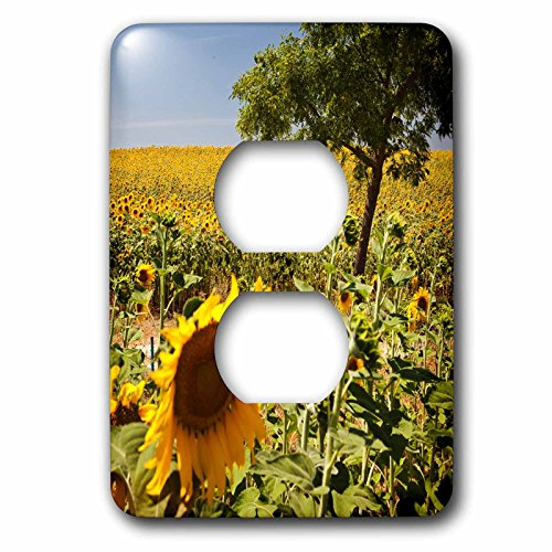 3dRose lsp_205429_6 Spain, Andalusia, Cadiz Province. Tree In Field Of Sunflowers. - 2 Plug Outlet Cover by 3dRose