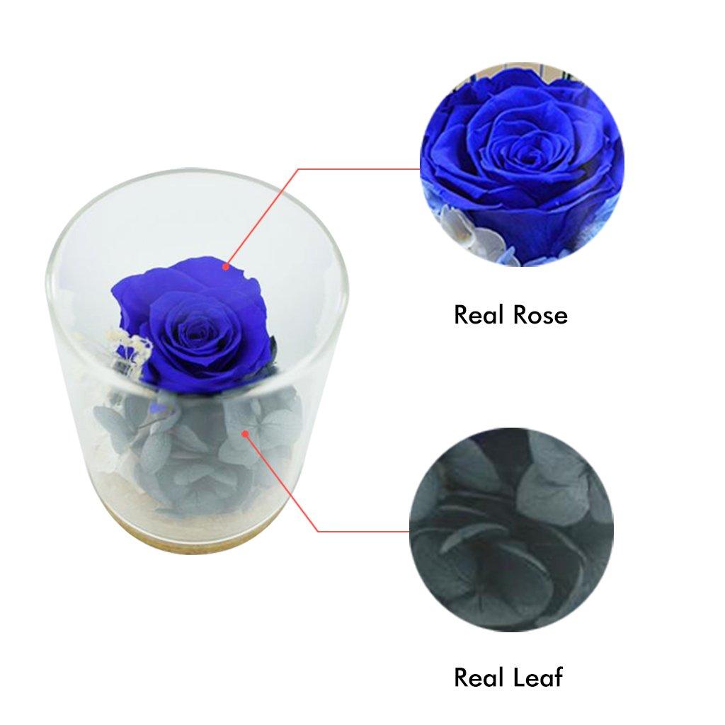Tumao Konservierte Rose Blau, Die Ewige Rosa Rose Perfekt als ...