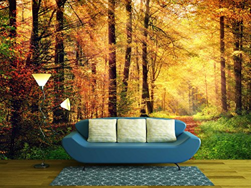 Autumn Forest Scenery with Rays of Warm Light Illumining the Gold Foliage
