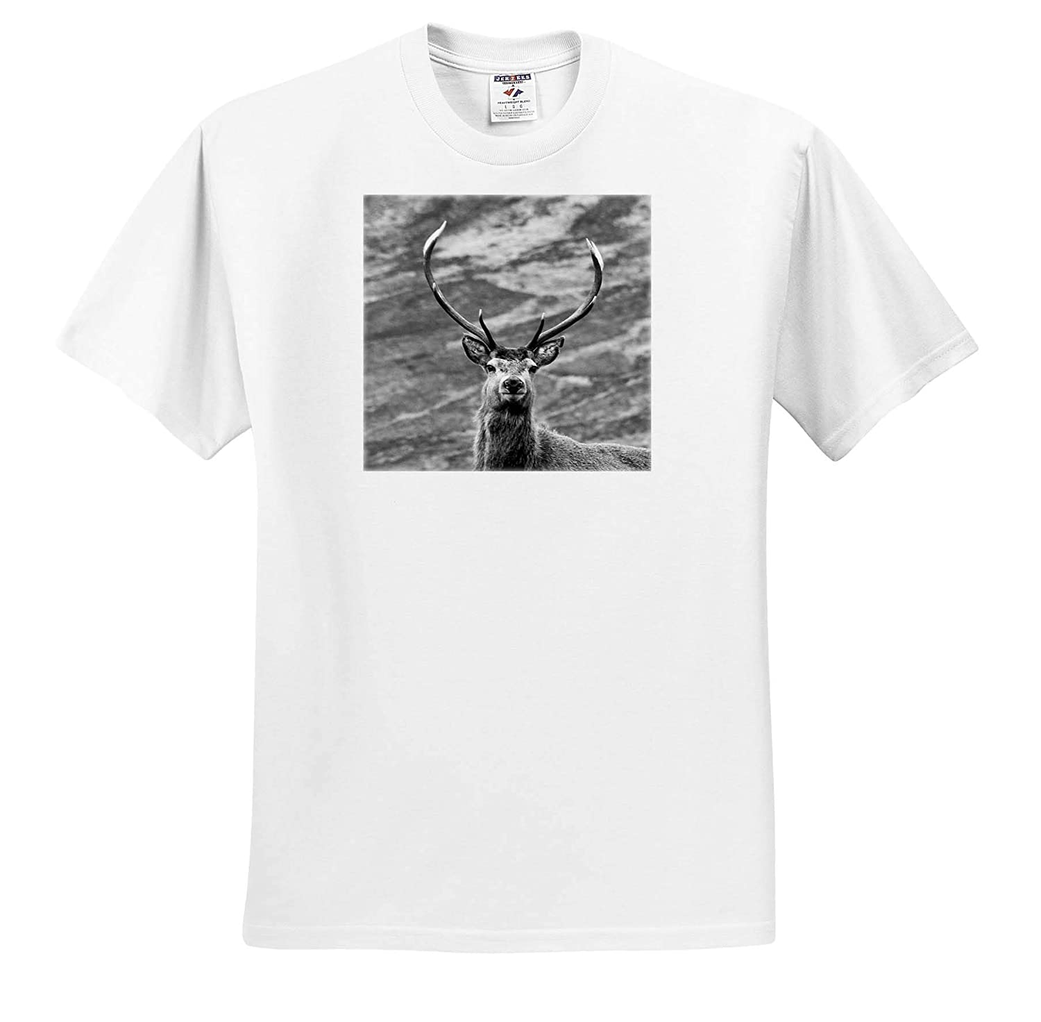 3dRose Made in The Highlands T-Shirts Head Shot of a Stag Stag Head Photograph Highlands of Scotland
