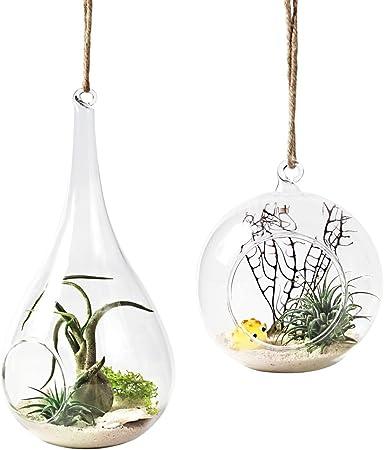 Amazon Com Mkono 2 Pack Glass Hanging Planter Air Plant Terrarium