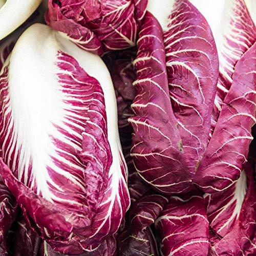Verona Salad (Radicchio Garden Seeds - Rouge de Verona Variety - 1 oz - Heirloom Vegetable Gardening Seed - Grow Non-GMO Vegetables and Salad Greens)