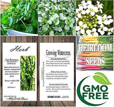 Upland watercress seeds 1//8 oz