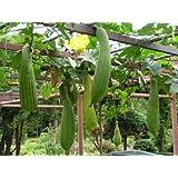 Luffa Sponge Gourd Seed by Stonysoil Seed Company