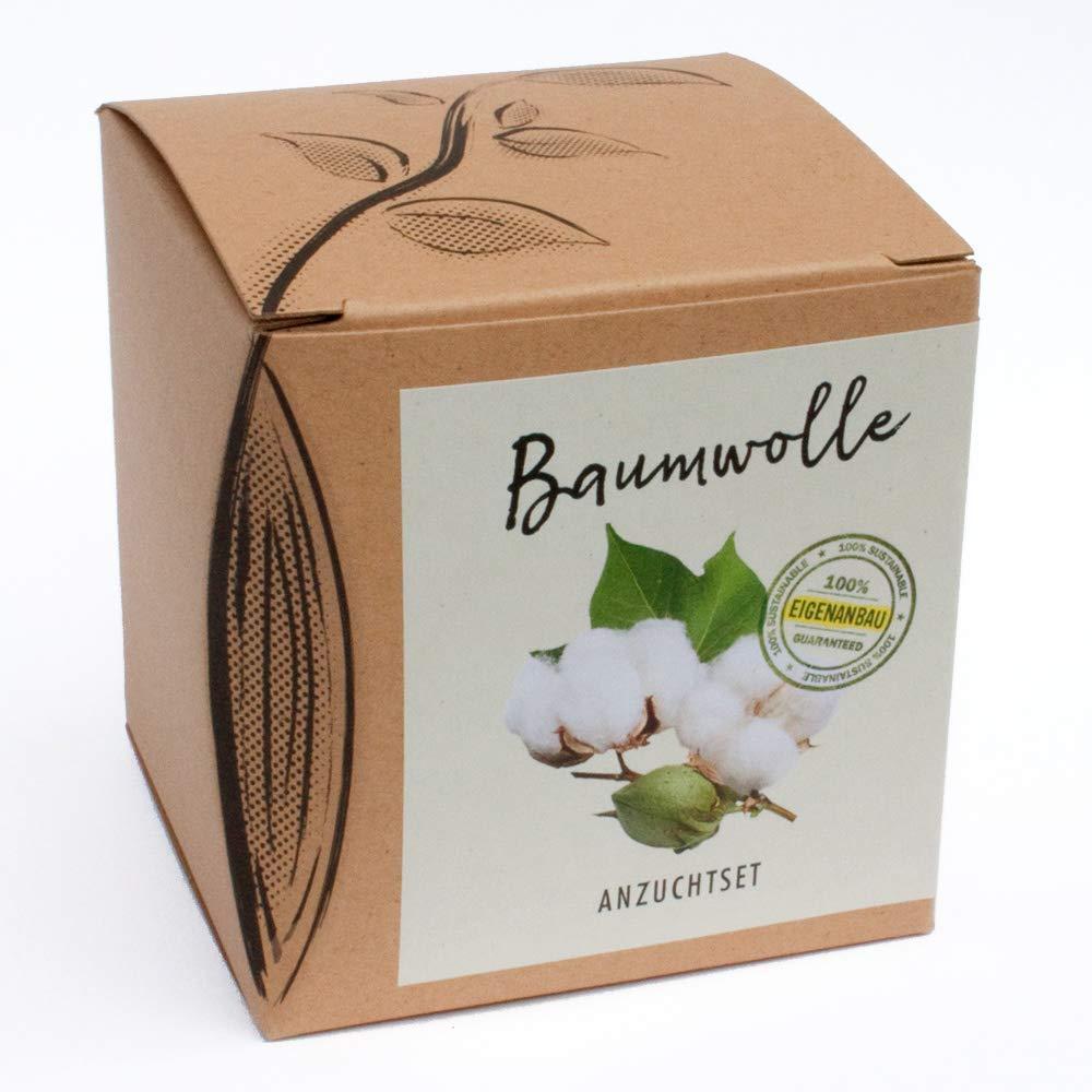 Geschenk-Anzuchtset Baumwolle Naturkraftwerk e. U.
