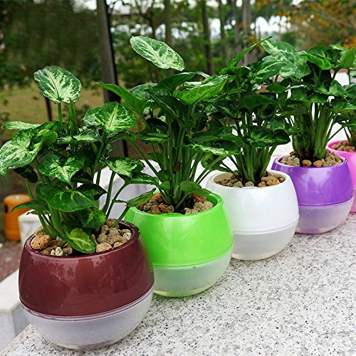 Mkono 5 Pack Self Watering Planter Plastic Flower Pot 4 Inch (Mixed Colors) by Mkono