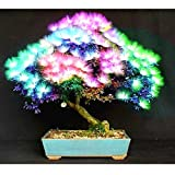 20 pcs Bonsai Albizia Flower Seeds Called Mimosa Silk Tree Seed Rare Garden Potted Plants Rainbow Flowers Pot diy plant gift Multi-Colored